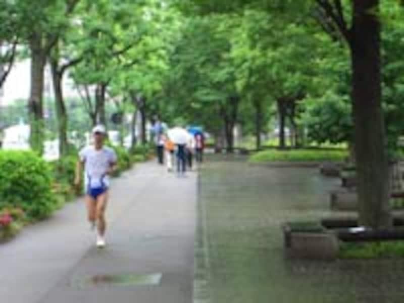 緑したたる中のジョギング、気持ちがいいものです。この快感を享受できるのは、雨を厭わず飛び出した者の特権