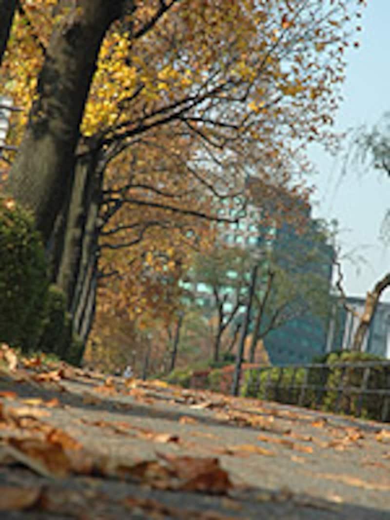 落ち葉で彩られた道