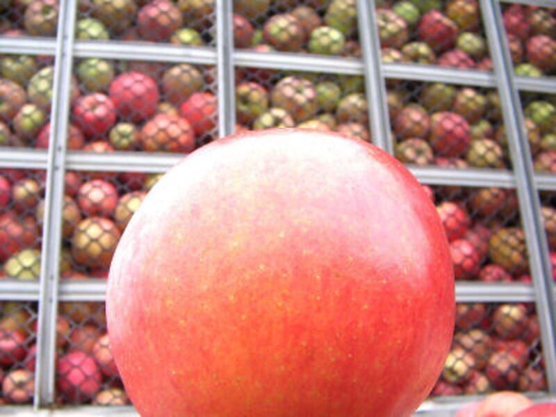 アップルパイ&タルトタタンのおいしいお店
