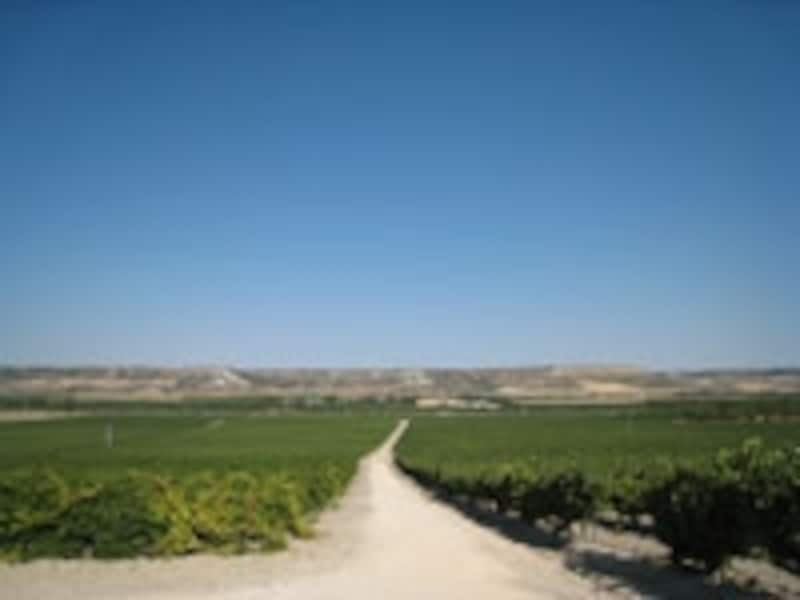 王室ご用達赤ワインも生産される、カスティーリャ・イ・レオン地方のリベラ・デル・ドゥエロ