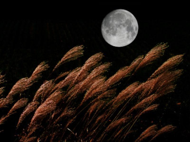 月でうさぎが餅つき、なぜ?海外での月の模様は?
