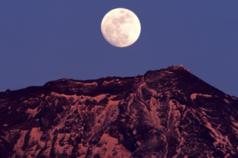 月 うさぎ 海外 模様
