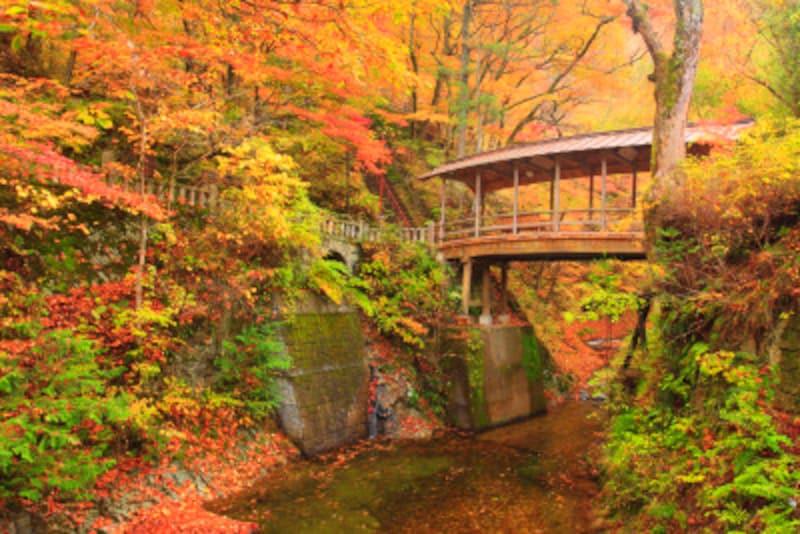 日本の紅葉が美しいのは理由がありあります