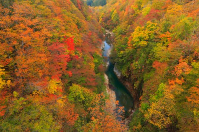 昼間お日様を浴びて夜は冷え込み、水分も豊富。3拍子揃った渓谷は、紅葉も見事!