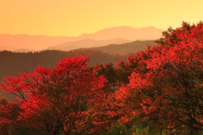 秋の夕日に照る山紅葉~♪<童謡「紅葉」詞:高野辰之/曲:岡野貞一>