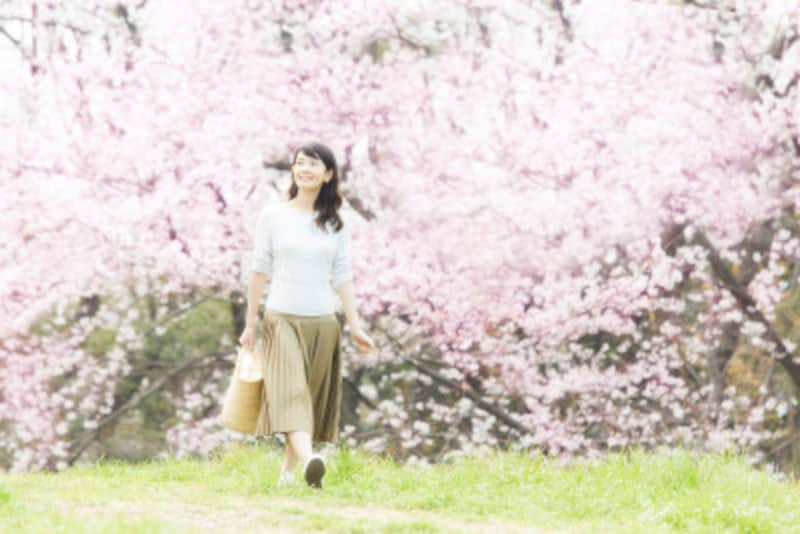 花時を迎えたら桜狩に出掛けましょう!