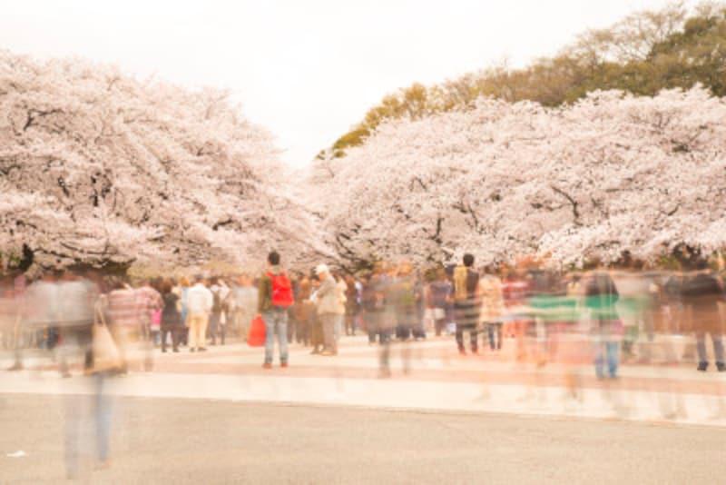 「桜人」が多い時期。「花疲れ」と言ってみれば、疲れも軽減するでしょう