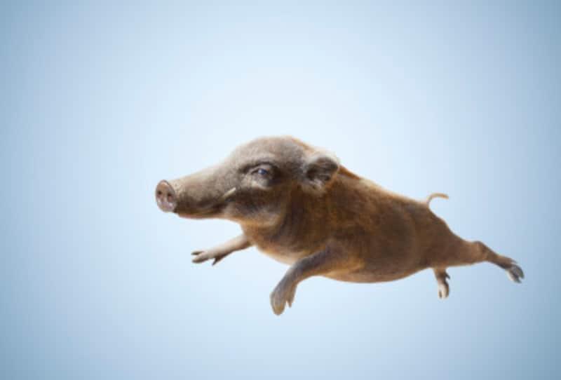猪の慣用句といえば猪突猛進!