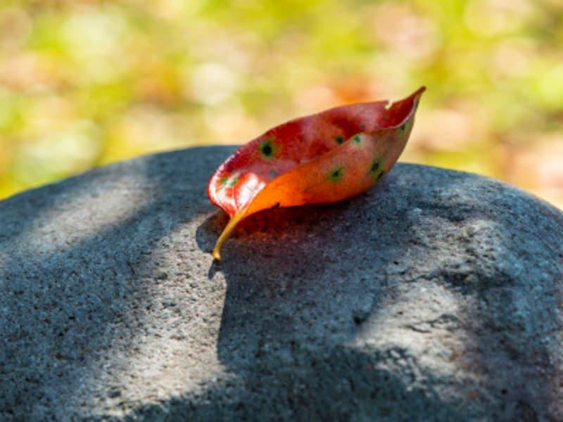 旧暦 和風月名 8月 葉月(はづき)旧暦では秋