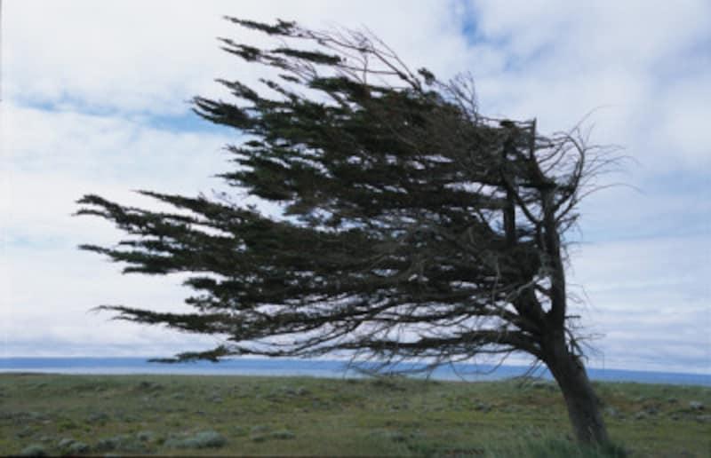 大型の台風は甚大な被害をもたらします