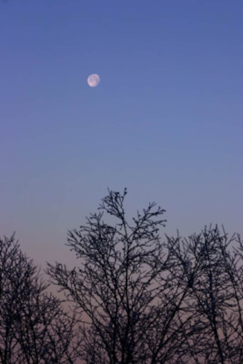 月の名前には時刻の推移による呼び方もあります。この写真の月は何と呼びましょう?