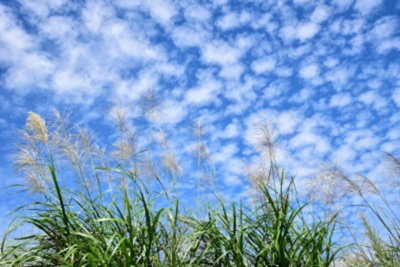 秋晴れも長くは続かず……「○心と秋の空」