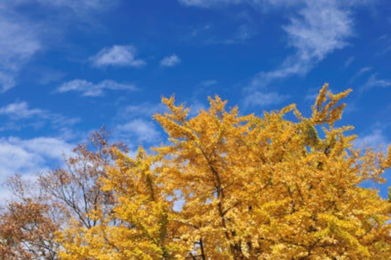 晴れたり、曇ったり、雨になったり。秋の空は移ろいやすいのです