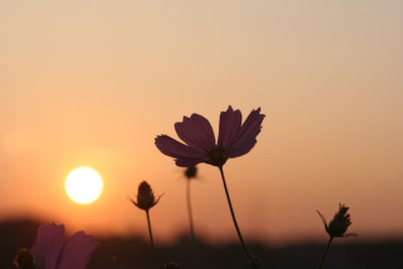 秋彼岸を過ぎると太陽の出番が少なくなり、暑さも和らぎます。春はこの逆ですね
