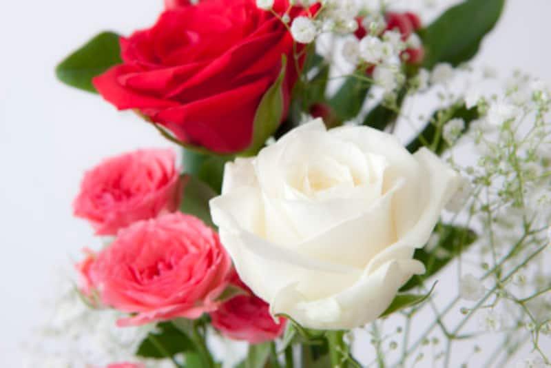 「父の日」にはバラ。白と赤のいきさつは「母の日」のカーネーションに似ています