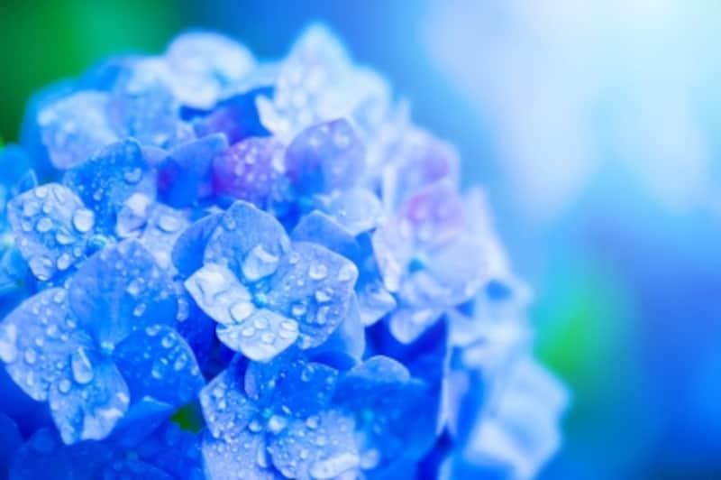 梅雨は春から夏へと移る時期にみられる季節現象。数千キロにわたる梅雨前線が少しずつ北上し、1~2か月の長雨をもたらします