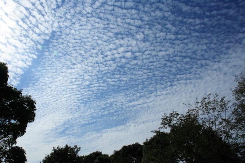 秋の雲:いわし雲