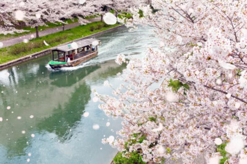見ごろはいつ? お目当ての桜の様子が気になりますね