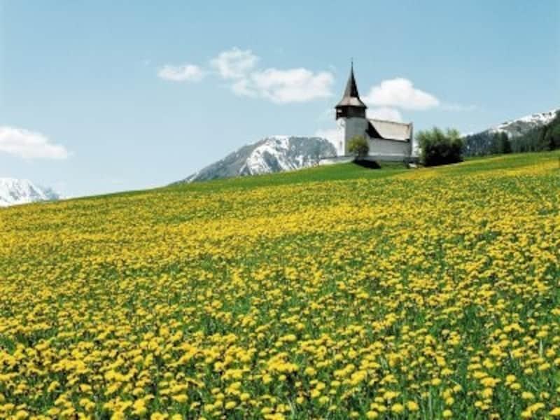 牧草地を埋め尽くすタンポポ。スイスの5月は生命の息吹を感じさせてくれる。