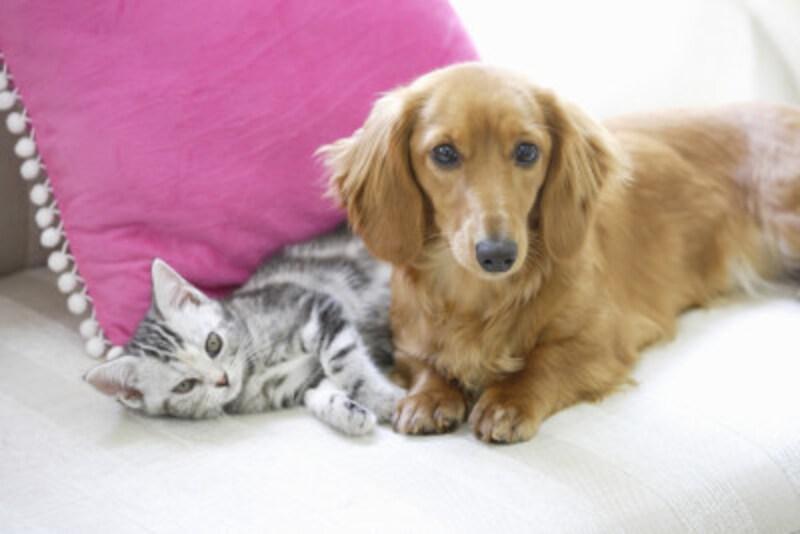 「犬好き」か「猫好き」かで、その人の性格や恋愛傾向などの特徴、相性がわかる!