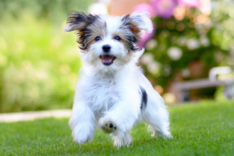 犬好き男子&犬好き女子の特徴や恋愛傾向