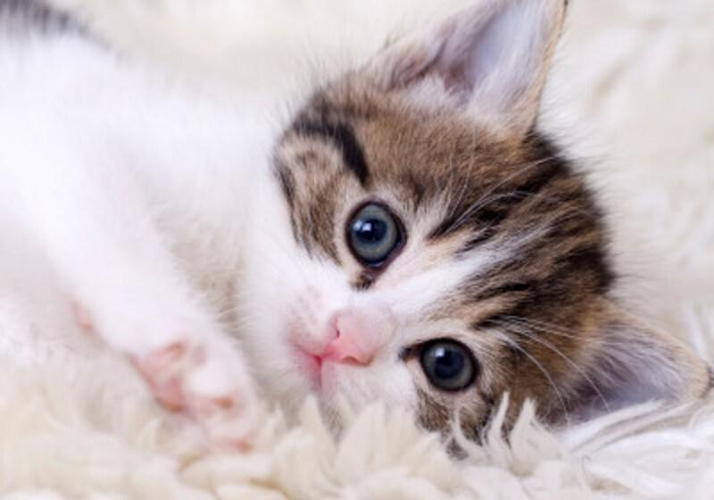 猫好き男子&猫好き女子の特徴や恋愛傾向