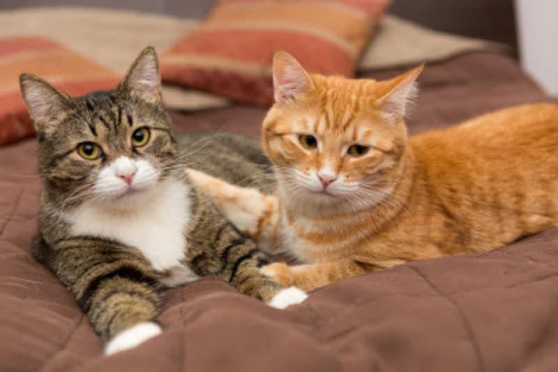 「猫好きで、性格が猫タイプ」の人の恋愛相性診断