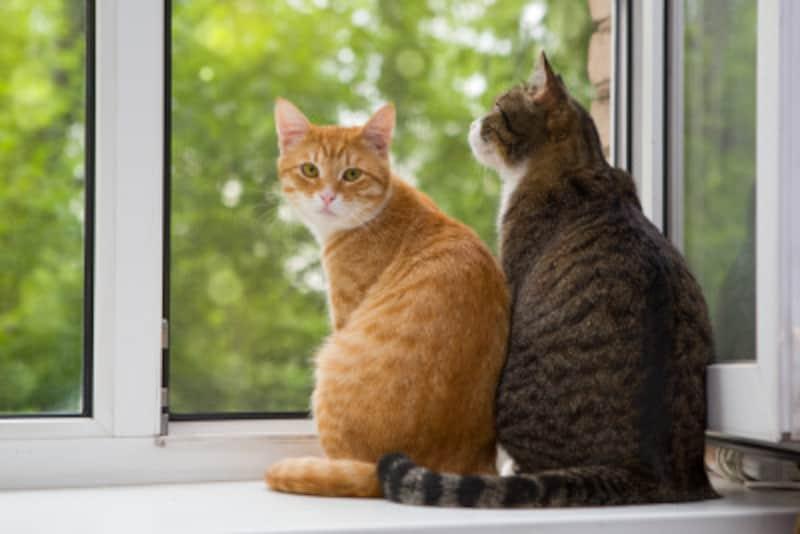 「猫好きで、性格が犬タイプ」の人の恋愛相性診断