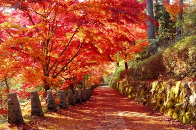 秋が好きな人は、無口で繊細