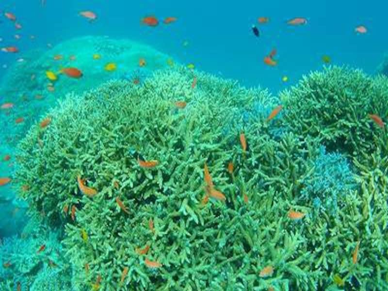 リールのまわりを泳ぐカラフルな熱帯魚undefined写真提供:ジーフリー
