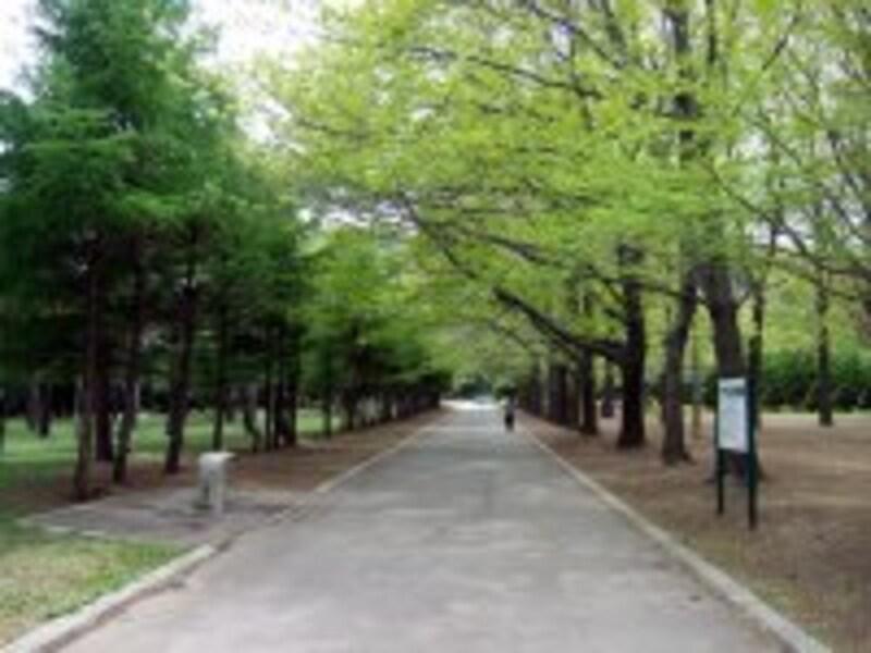 円山公園2。