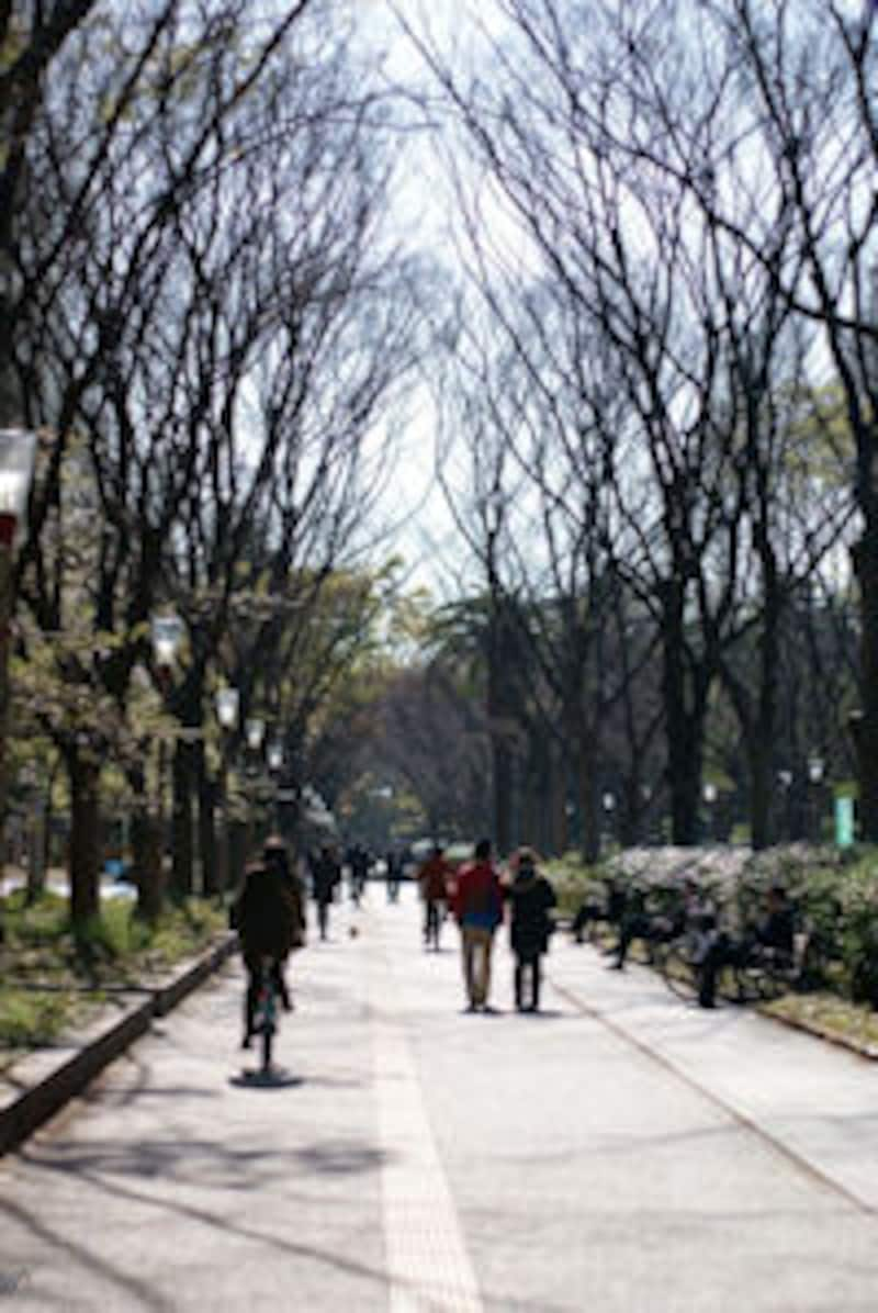 うつぼ公園