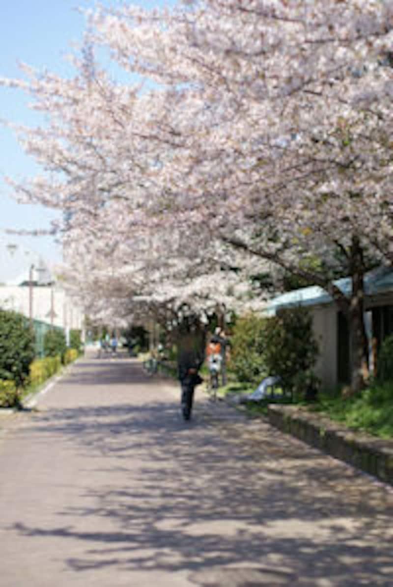 ウツボ公園。