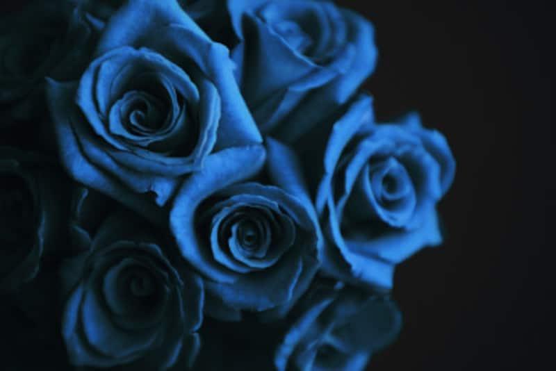 自然界では希少な色であるブルーはさわやかさや涼やかさに加えて神聖さも感じさせる