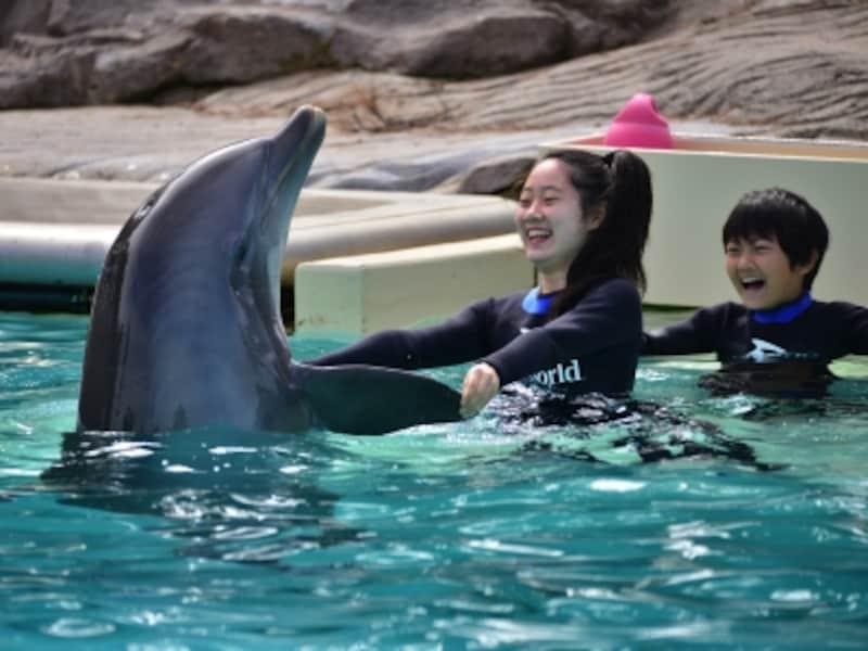 イルカのプールでイルカと遊ぶことができる!
