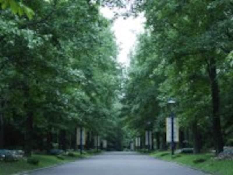 清々しい散歩道