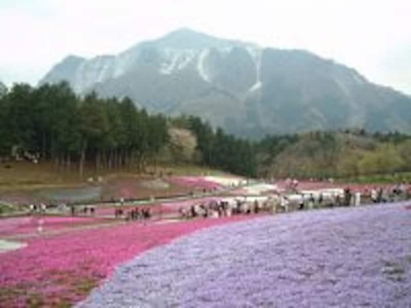 カラフルな芝桜の模様を楽しむ