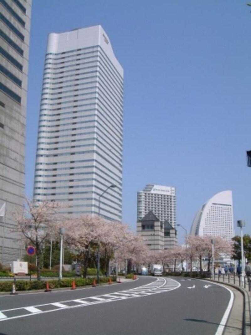 みなとみらい・さくら通りの桜