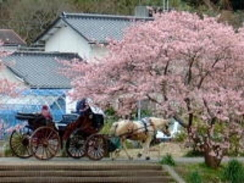 花馬車からお花見を楽しむこともできますよ(2005年2月26日撮影)