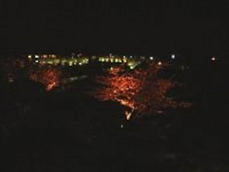 幻想的な下賀茂みなみの桜のライトアップ(2007年2月24日撮影)