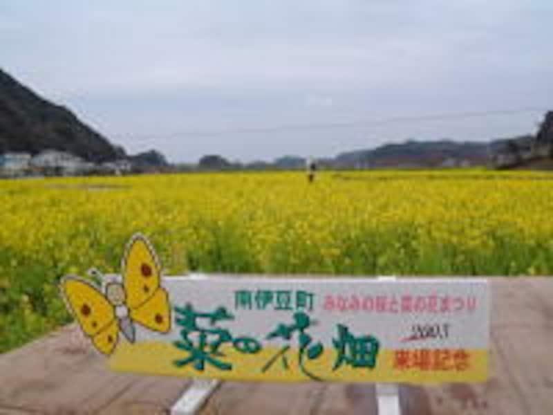 みなみの桜と菜の花まつり(4)/菜の花畑