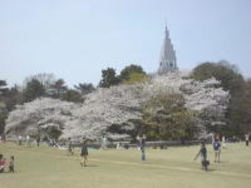 新宿御苑の桜(1)