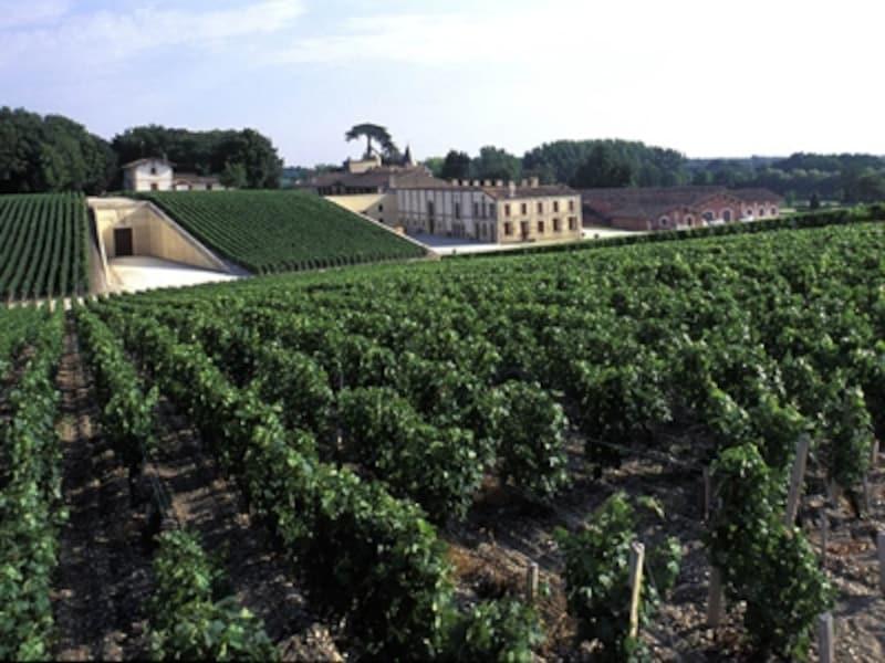 ボルドーの有名ワイン、ラフィット・ロートシルトのぶどう畑©Comite?Re?gionalduTourismeenAquitaine