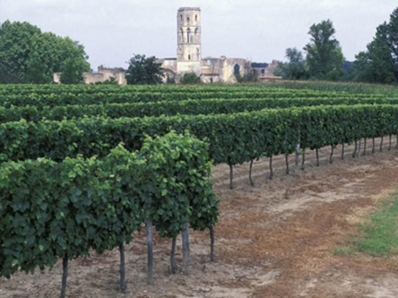 フランス最大のワイン生産地ボルドーのぶどう畑©Comite?Re?gionaldeTourismed'Aquitaine