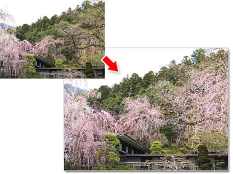 しだれ桜は、上から下に流すように描きます
