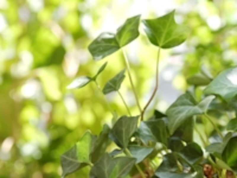 植物が持つ無限のパワーを全身で吸収!
