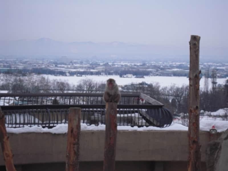 ニホンザルが暮らす「さる山」。さすがにニホンザルたちは寒そうで、お互いに暖め合っている様子が、なんともほほえましい限りです。「さる山」の背景に広がる雪景色がなかな絵になるグッドロケーションです