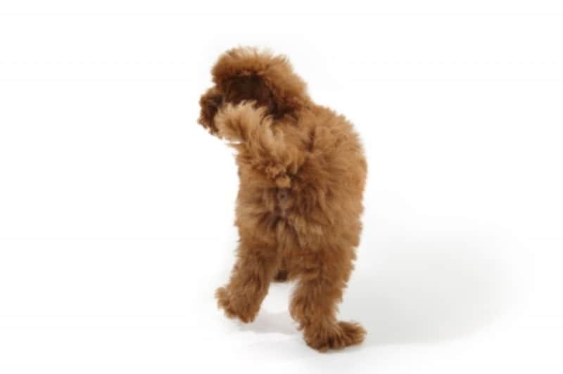 犬がしっぽを振るのは嬉しいから?