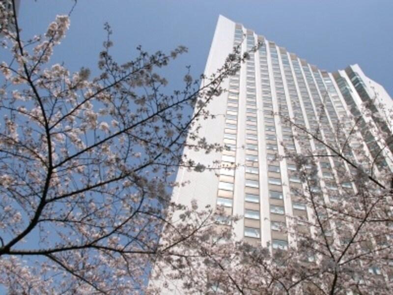開花時期の3月下旬から4月中旬には桜並木のライトアップも。