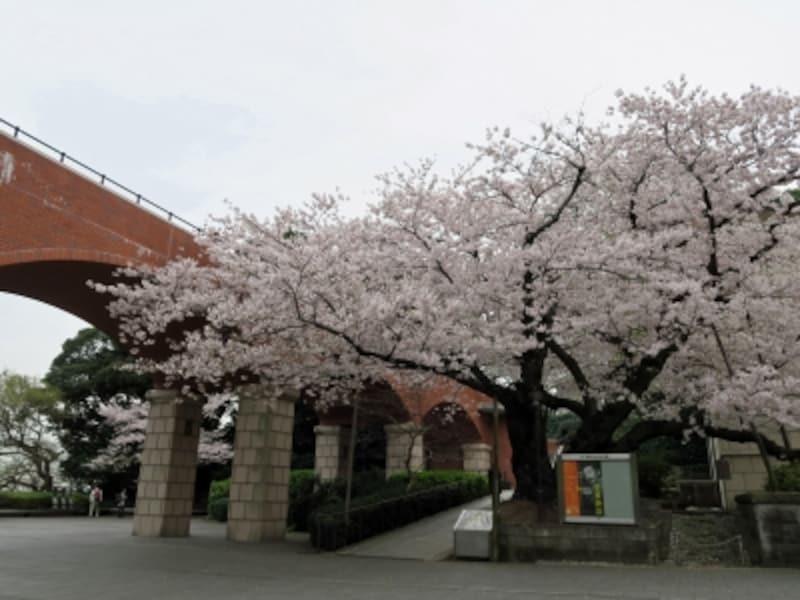 港の見える丘公園から神奈川近代文学館のほうに歩いていくとサクラが咲く風景に出会えます(2016年4月6日撮影)
